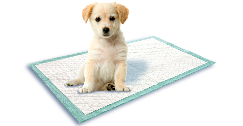 Training Your Dog To Pee On Pads