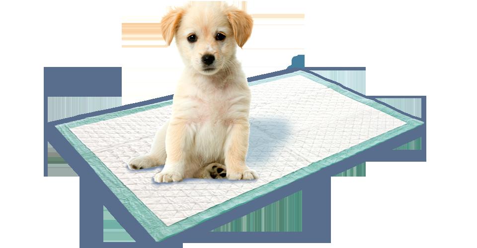 Swirl Puppy Training Mat From Swirl 174