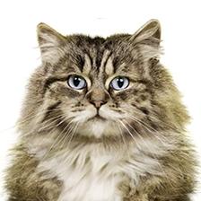 Damit das Katzenklo eine saubere Sache bleibt